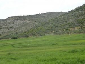 auf dem Weg nach Nablus: grüne Landschaft