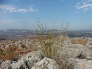 am Arbel Nationalpark