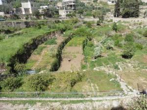 die terrassierte Gemüsegärten in Battir