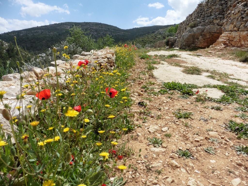 Von Battir nach Beit Jala