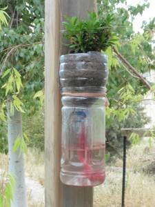 verschiedene Formen Wasser zu speichern