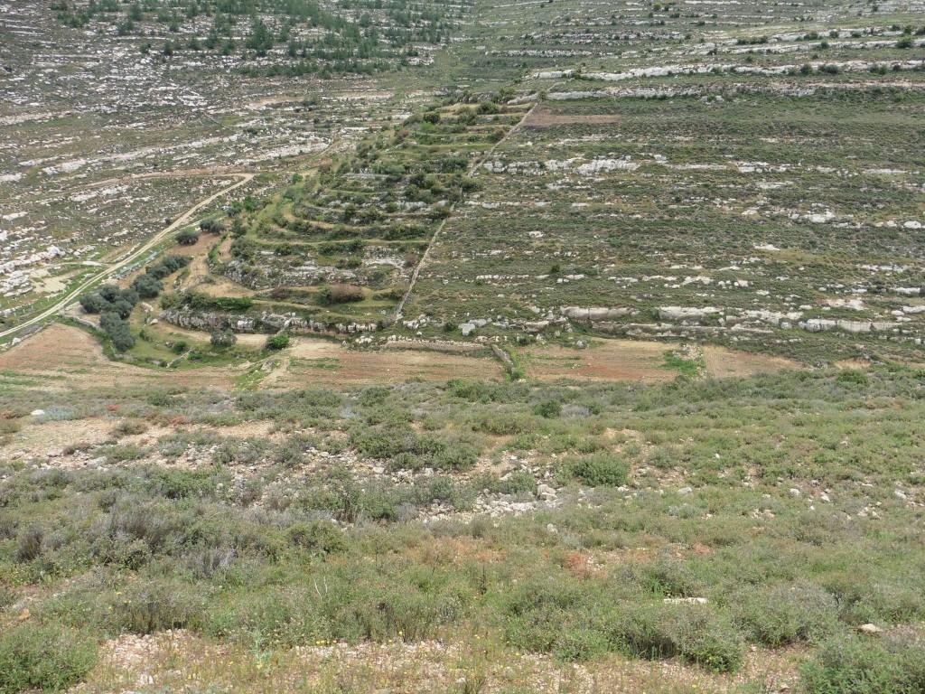 im Tal wurden mehr als 1.000 neue Obstbäume gepflanzt