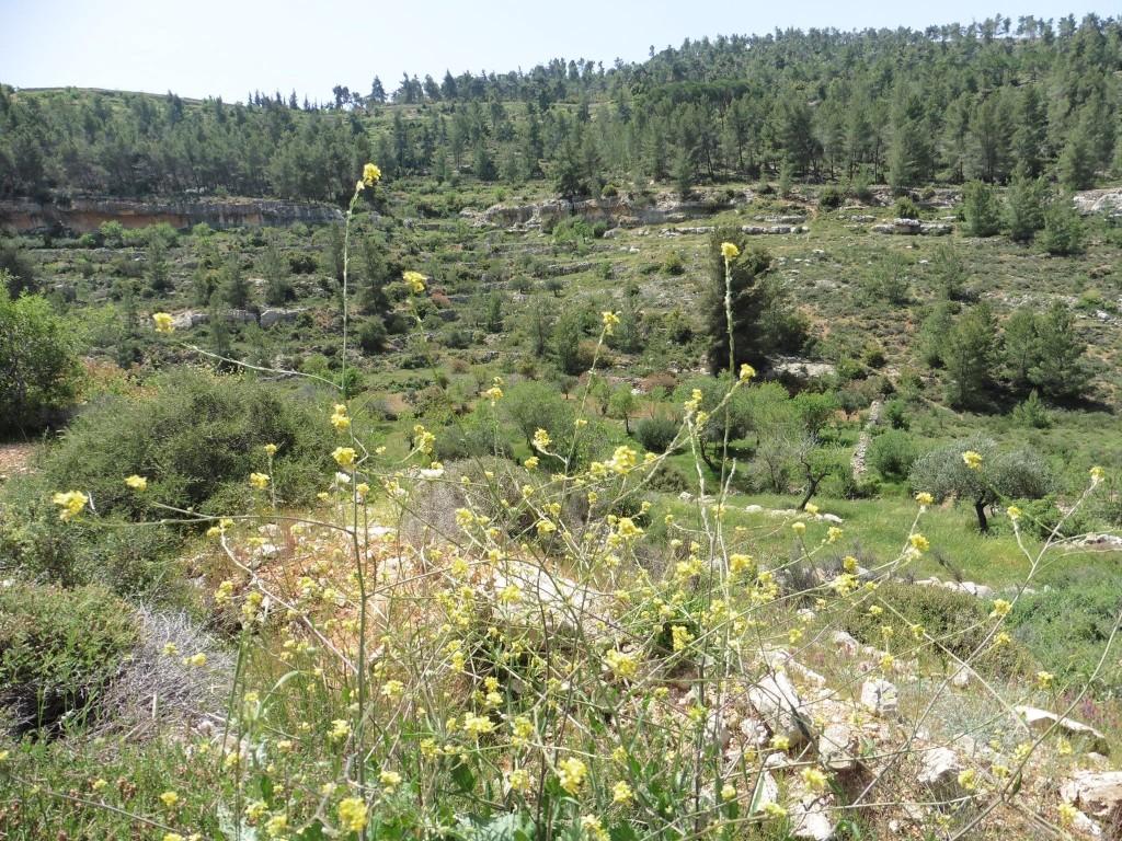 wunderschöne Landschaft ....aber abgesperrt für die Bürger von Beit Jala