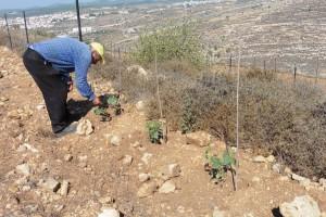 3.000 Weinstöcke wollen gepflanzt sein