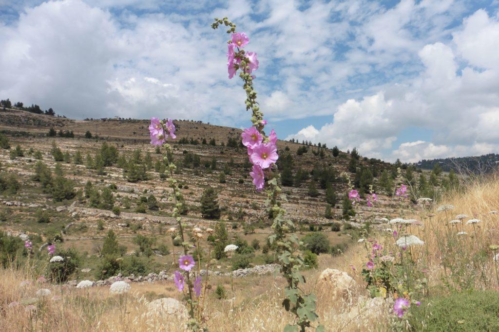 """wunderschönes Cremisantal nun ist der Zugang für die Menschen aus Beit Jala """"zubetoniert"""""""